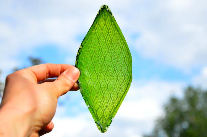BioSolar Leaf sta pulendo l'aria